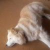 愛犬の話 保護犬と殺処分についても
